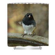 Junco Shower Curtain