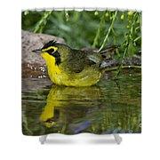 Kentucky Warbler Shower Curtain