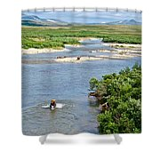 4-lay Of The Land Many Grizzly Bears In Moraine River In Katmai National Shower Curtain