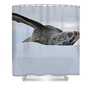 Leopard Seal Shower Curtain