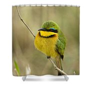 Little Bee-eater Shower Curtain