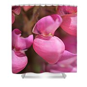 Lupine Named Gallery Pink Shower Curtain