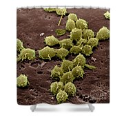Macrophages On The Surface Shower Curtain