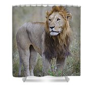 Male Lion Shower Curtain