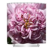 Marguerite Daisy Named Double Pink Shower Curtain