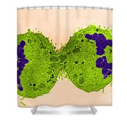 Mitosis, Late Telophase, Tem Shower Curtain