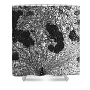 Mitotic Spindle, Tem Shower Curtain