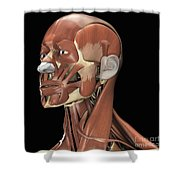 Muscles Of The Head And Neck Shower Curtain