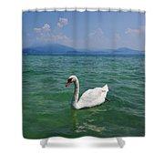 Mute Swan. Sirmione. Lago Di Garda Shower Curtain