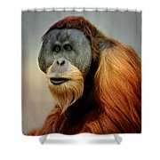 Orang Utan Shower Curtain