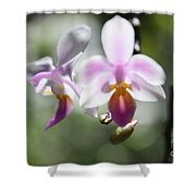 Orchids Dance Shower Curtain