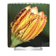 Osteospermum Named Sunadora Palermo Shower Curtain