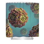 Parvovirus B19 Shower Curtain