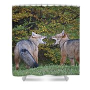 Patagonian Red Fox Shower Curtain