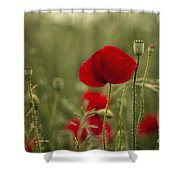 Red Poppy Flowers Shower Curtain by Nailia Schwarz