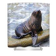 Sea Lion Shower Curtain by Alexey Stiop