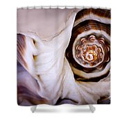 Seashell Detail Shower Curtain by Elena Elisseeva