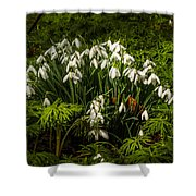 Snowdrop Woods Shower Curtain