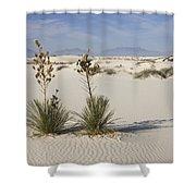 Soaptree Yucca In Gypsum Sand White Shower Curtain