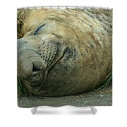 Southern Elephant Seal Shower Curtain