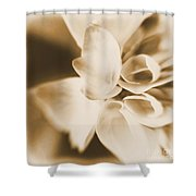 Spring 2014 Shower Curtain