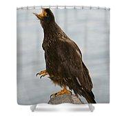 Striated Caracara Shower Curtain