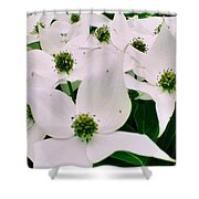 Summer 2013 Shower Curtain