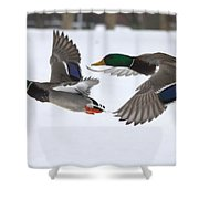 The Great Race Shower Curtain