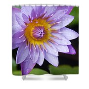 The Lotus Flower Shower Curtain