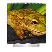 Treefrog Shower Curtain