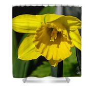 Trumpet Daffodil Named Exception Shower Curtain
