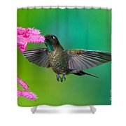 Tyrian Metaltail Shower Curtain