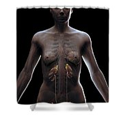 Urinary System Female Shower Curtain