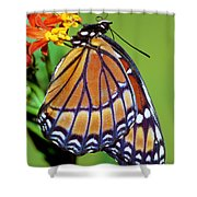 Viceroy Butterfly Shower Curtain