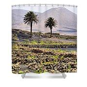 Vineyard On Lanzarote Shower Curtain