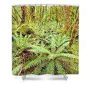 Virgin Rainforest Wilderness Of Fiordland Np Nz Shower Curtain