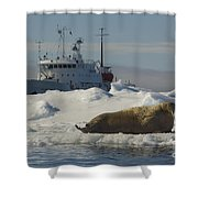 Walrus Resting On Ice Floe Shower Curtain