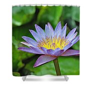 Water Lily 13 Shower Curtain
