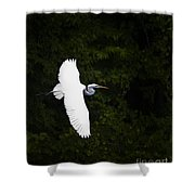White Egret In Flight Shower Curtain