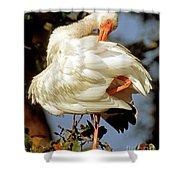 White Ibis Eudocimus Albus Shower Curtain