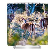 White Tail Deer Bambi In The Wild Shower Curtain