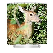 White Tailed Deer Portrait Shower Curtain