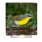 Yellow-breasted Chat Shower Curtain