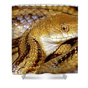 Yellow Rat Snake Shower Curtain