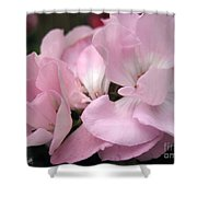 Zonal Geranium Named Tango Light Orchid Shower Curtain
