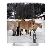 40104-5 Norwegian Horses Shower Curtain