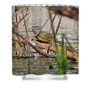 42- Florida Red-bellied Turtle Shower Curtain