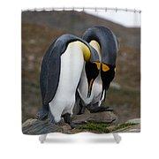 King Penguins Shower Curtain