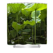 4858 Shower Curtain