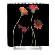 4daisies On Stems Shower Curtain